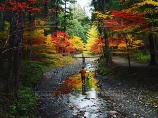 紅葉と川と人の写真・画像素材[4668948]