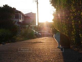 猫,空,夕日,屋外,太陽,かわいい,樹木,ねこ,休憩,地面,日向ぼっこ,ネコ
