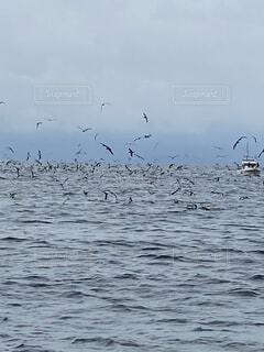 動物,鳥,屋外,水面,群れ,水鳥
