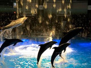 動物,魚,イルカ,水族館,水面,泳ぐ,サメ,ショー,シャチ,海獣,クジラ,バンドウイルカ,スイミング プール,ハンドウイルカ