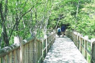 新緑を散策の写真・画像素材[4676413]