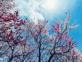 空,花,春,景色,花桃