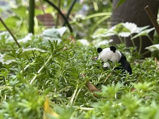 動物,森林,鳥,屋外,緑,黒,草,樹木,新緑,パンダ,ジャングル,草木,水鳥,クマ