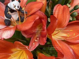 庭の植木とパンダフィギュアの写真・画像素材[4679598]