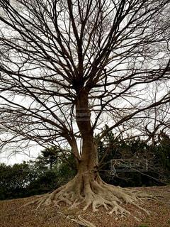 空,屋外,樹木,賀茂川