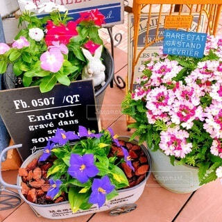 #花,#夏の花,#ブリキ鉢,#エキザカムサファイア,#ニチニチソウ,#バーベナラナイ