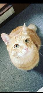 猫,動物,屋内,緑,かわいい,オレンジ,床,子猫,ネコ科