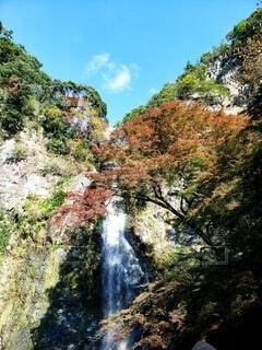 自然,風景,秋,屋外,水面,滝,樹木,草木