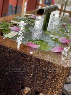 花,神社,水面,花びら,涼,手水