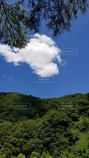 自然,空,森林,屋外,雲,青い空,山,樹木,新緑,草木