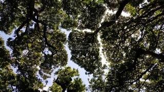 自然,空,森林,屋外,樹木,草木