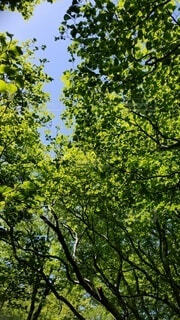 自然,空,森林,屋外,森,緑,葉,山,登山,樹木,草木,山歩き