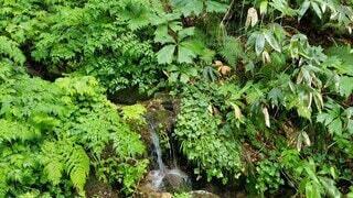 自然,風景,川,山,景色,癒し,せせらぎ,鳥の声,自然の音