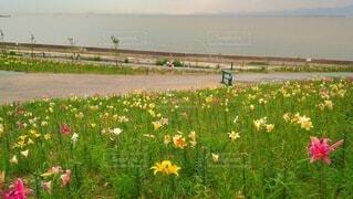 自然,空,花,花畑,屋外,景色,草,草木,彩り