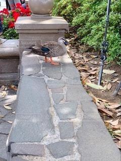 石垣の上に座っている鳥の写真・画像素材[4678503]