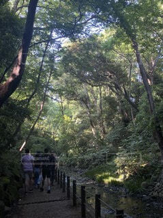公園,森林,屋外,樹木,人物,人,ハイキング,ジャングル,草木