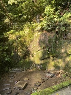 自然,風景,屋外,樹木,地面,ジャングル,草木