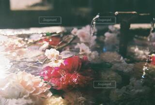 自然,花,太陽,景色,フィルムカメラ,造花,熊野大社