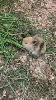 動物,うさぎ,屋外,かわいい,草,兎,こども,ウサギ