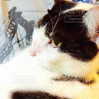 猫の写真・画像素材[210411]