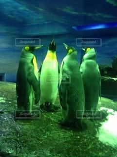 ペンギンの闇の儀式の写真・画像素材[4680183]