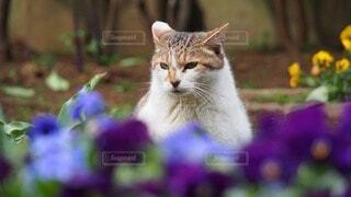 猫,花,動物,かわいい,トイレ,草木,ノラネコ,真面目な顔