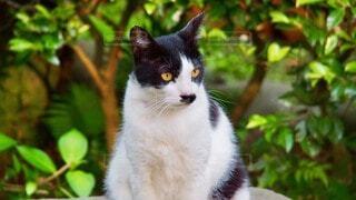 猫,動物,屋外,白,黒,座る,ノラネコ,ぶちネコ