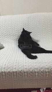 猫,動物,屋内,かわいい,黒,景色,オシャレ,可愛い,お洒落,おしゃれ