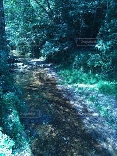 薄暗い山の中、川の風景の写真・画像素材[4679232]