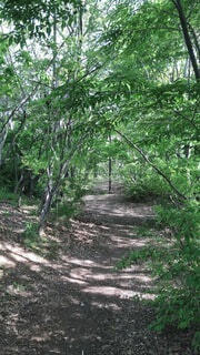屋外,樹木,地面,ジャングル,草木