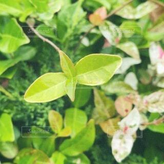 花,屋外,緑,葉