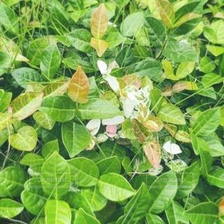 花,屋外,緑,葉,野菜,蝶,草木,フローラ