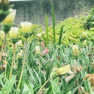 春,屋外,草木,フローラ
