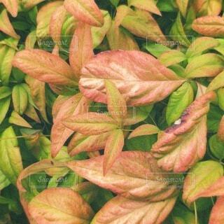 花,葉,草木