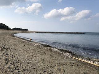 犬,自然,風景,海,空,夏,屋外,湖,砂,ビーチ,雲,散歩,水面,海岸,地面