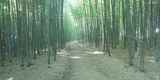 自然,屋外,緑,竹,芸術,癒やし,日中