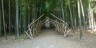 自然,屋外,緑,アート,樹木,竹,芸術,トンネル,癒やし