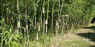 自然,屋外,景色,樹木,竹,草木