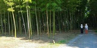 自然,屋外,緑,樹木,竹,癒やし