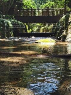 自然,公園,屋外,湖,水面,池,樹木,地面,草木