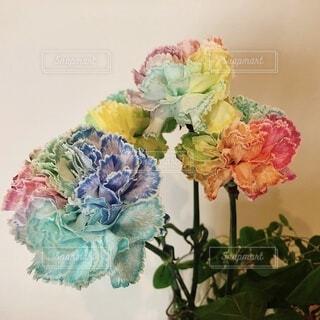 花,花束,バラ,薔薇,壁,カーネーション,虹色,レインボーフラワー