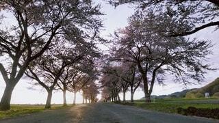 自然,風景,空,屋外,霧,草,樹木,草木