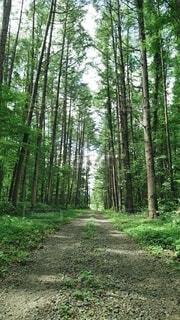 自然,風景,森林,木,屋外,草,樹木,木立,地面,ジャングル,汚れ,草木,原生林,パス,ウッドランド,亜熱帯針葉樹林