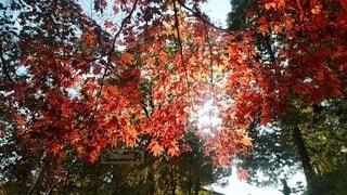 空,秋,屋外,葉,樹木,草木