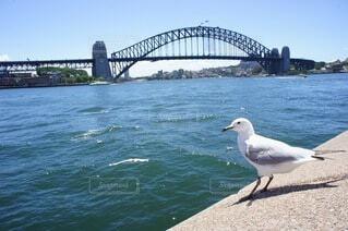 水の体に架かる橋の上に立つ鳥の写真・画像素材[4767787]