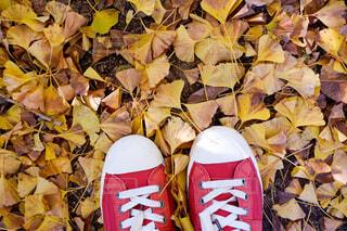 秋のお散歩の写真・画像素材[4813451]
