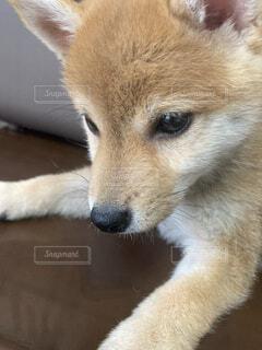 犬のクローズアップの写真・画像素材[4684876]