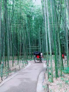 京都!嵐山!竹林!人力車!の写真・画像素材[768854]