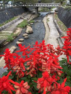 庭の赤い花の写真・画像素材[780909]