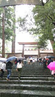 雨の日!の写真・画像素材[812507]